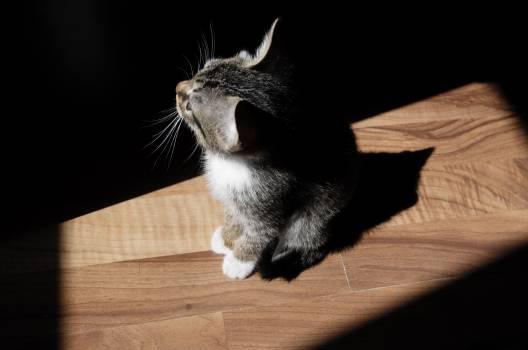 Cat Feline Kitten #254026