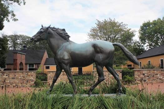 Horse Thoroughbred Animal Free Photo