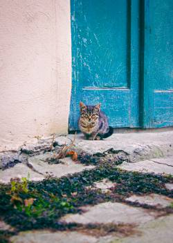 Kitten #25453