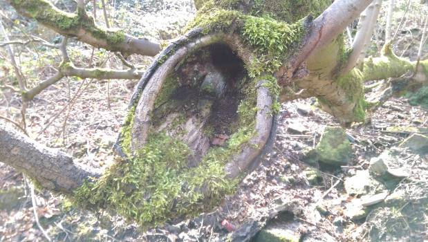 Hole Landscape Tree Free Photo