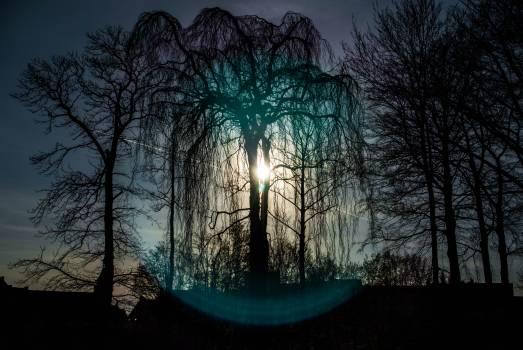 Landscape Sky Tree #254882