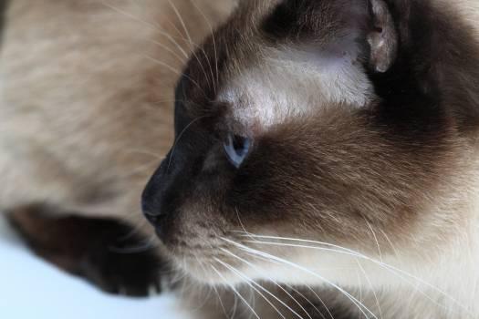 Cat Detail #25500