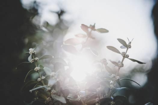 White Bone Flower Free Photo