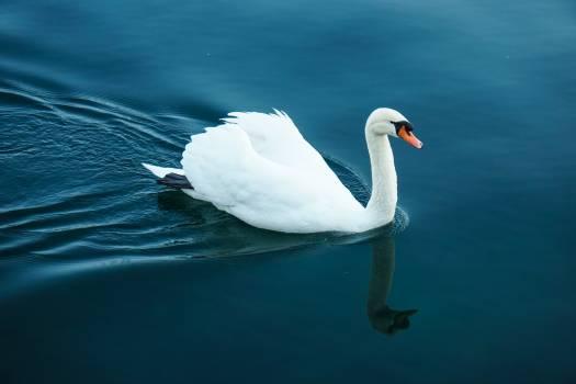 Bird Egret Heron Free Photo