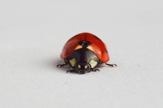 Ladybird #25606