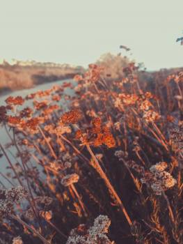 Maple Autumn Fall #256143