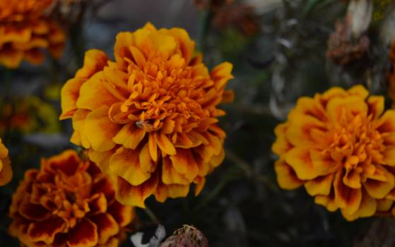 November Flowers.. #25625