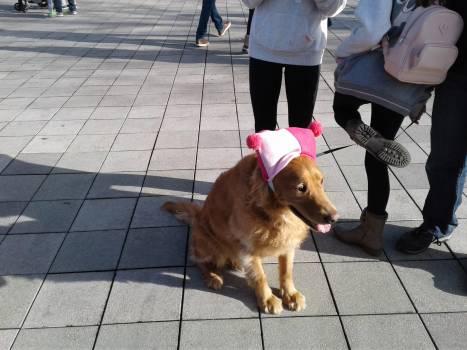 Dog Corgi Canine #256275