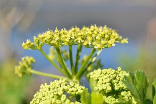 Herb Vascular plant Plant Free Photo
