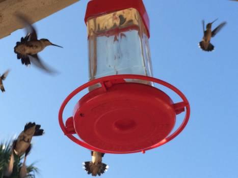 Bird feeder Device Sky #256522