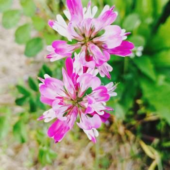 Pink Flower Flowers #256700