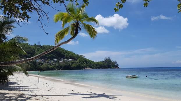 Beach Ocean Palm #256743