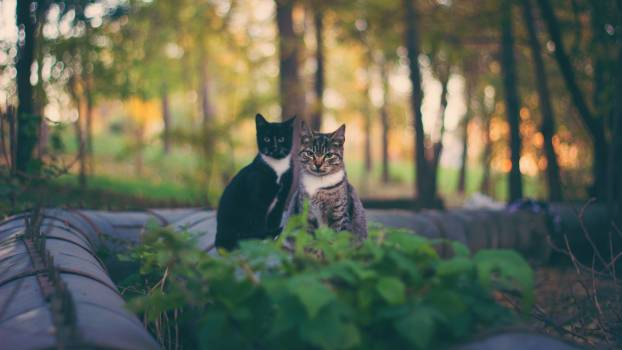 I found a park with cats #25704