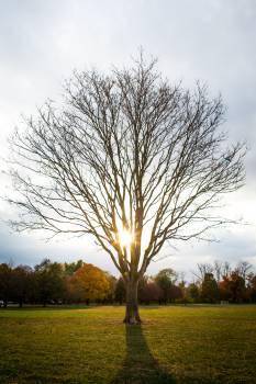 Tree-Fall #25727