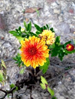 Flower Plant Blossom #257325