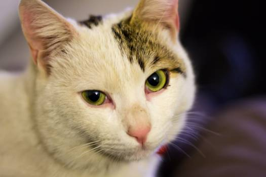 Cat Feline Kitten #257512