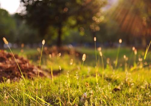 Sunny Free Photo