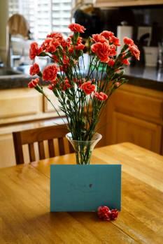 Carnations Free Photo