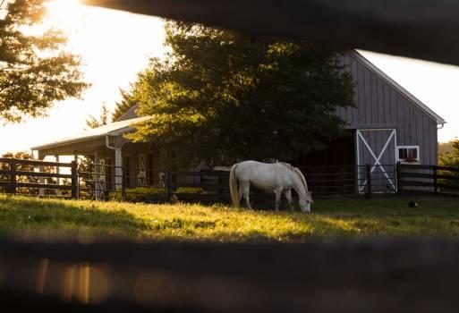 White Horse #25776