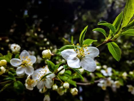 Flower Plant Blossom Free Photo