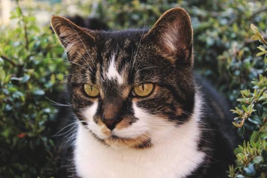 Cat Feline Animal #258038