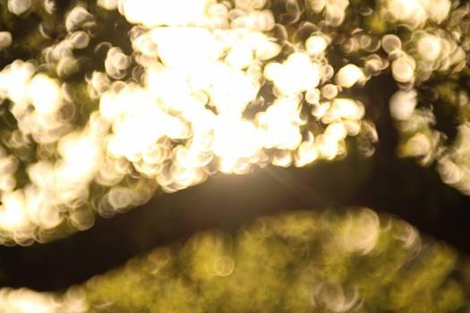 Yellow Texture Light Free Photo