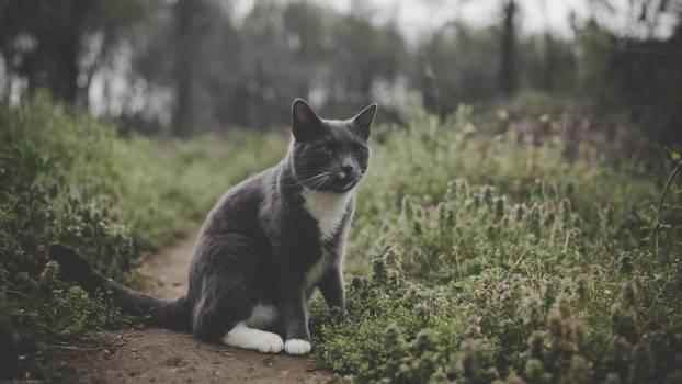 Cat Feline Kitten #258412