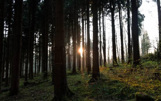 Landscape Tree Forest #258768
