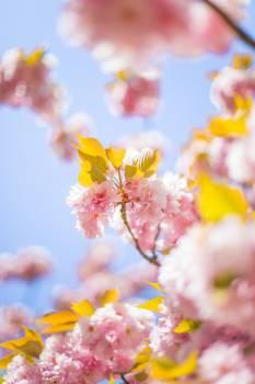 Flower Pollen Pink Free Photo