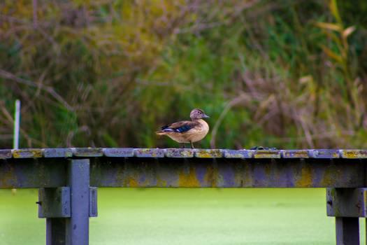 Quick! Duck! #25884