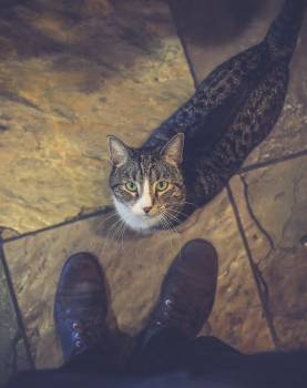Cat Feline Animal #258914
