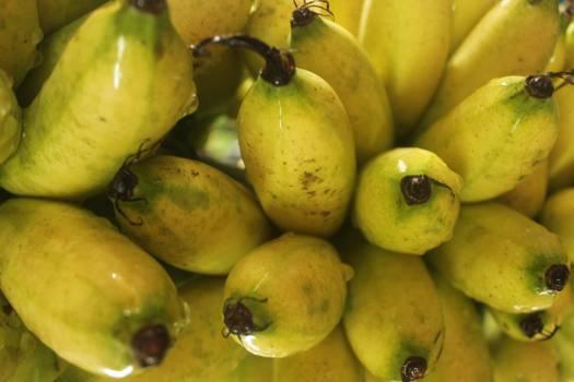 Quince Edible fruit Fruit #258941