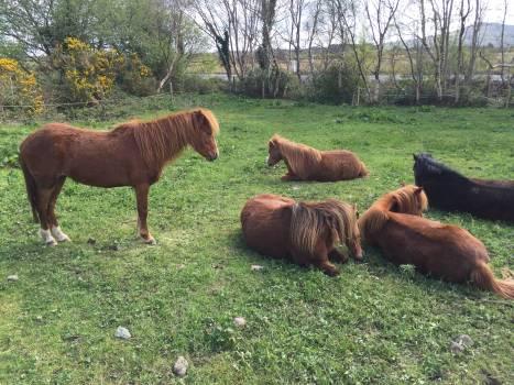 Horse Ranch Farm Free Photo