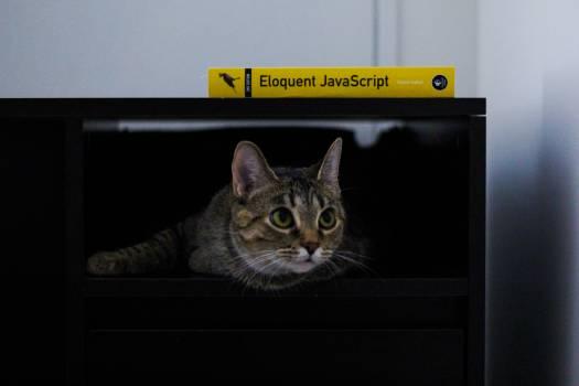 Cat Feline Animal #259185