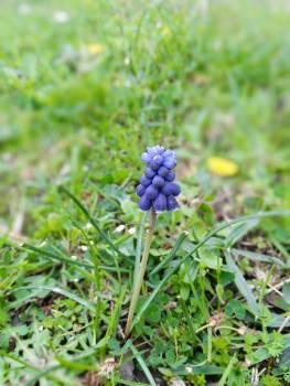 Flower Herb Plant Free Photo