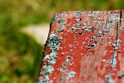 Fungus Organism Texture Free Photo