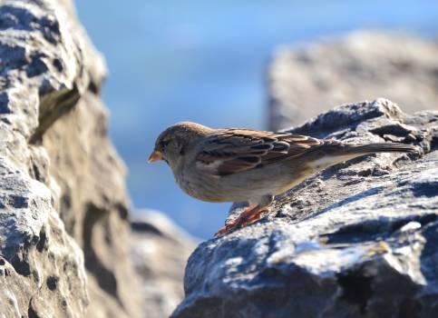 Epic sparrow #25942