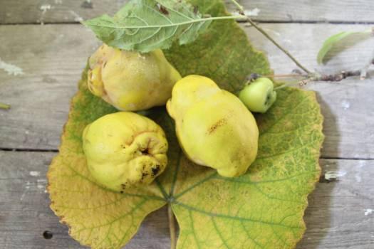 Fruit Grape Produce Free Photo