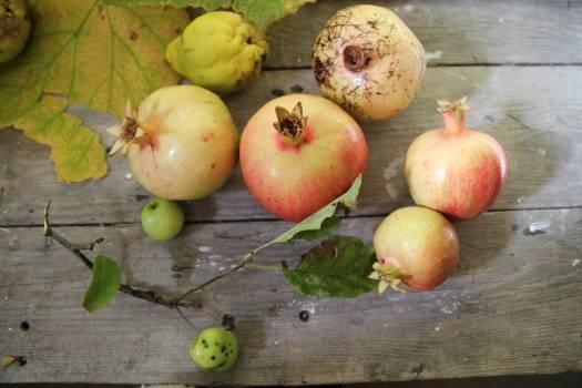 Fruit Edible fruit Apple #259490