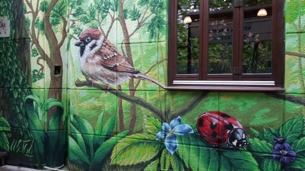 Sparrow Bird Vertebrate Free Photo