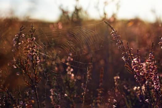 Spider's web #25986