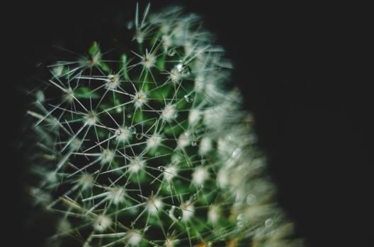 Cactus #25988