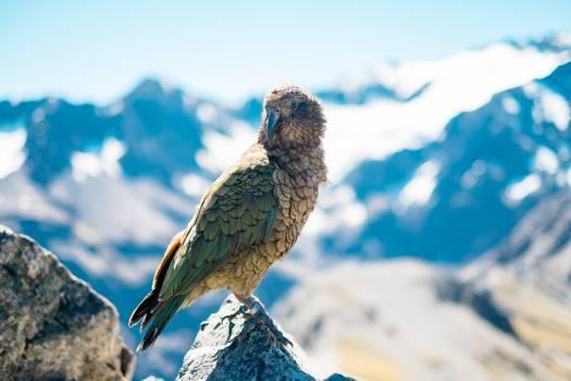 Bird Wildlife Dove Free Photo