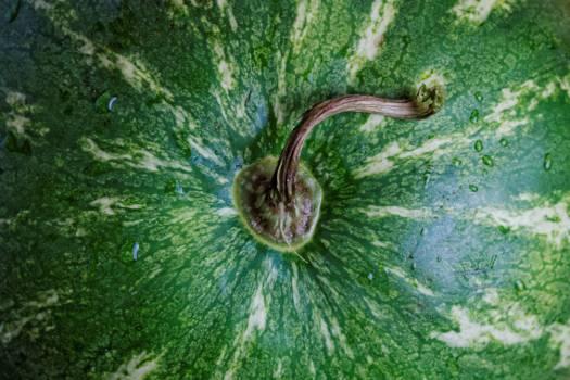 Watermelon #25993