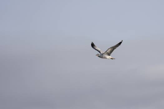 Albatross Seabird Bird Free Photo