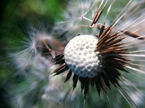 Sea urchin Echinoderm Invertebrate #260298