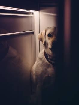 Dog Hunting dog Creep #26051