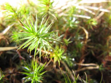 Leaf Plant Herb Free Photo
