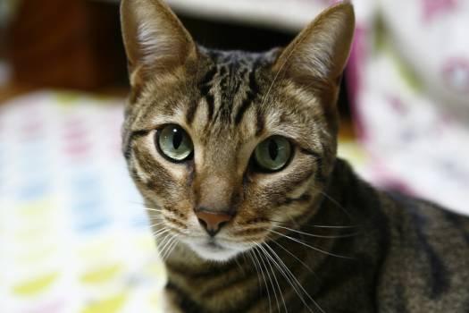 Cat Feline Domestic cat #260674
