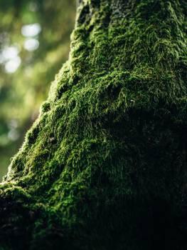 Moss Landscape Nature Free Photo